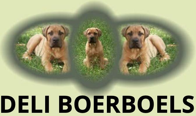 Deli Boerboels
